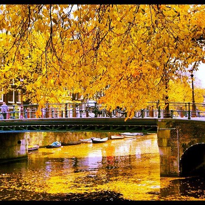 Fall Leaves in Amsterdam