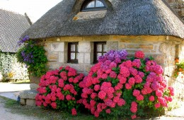 Brittany Thatched Cottage