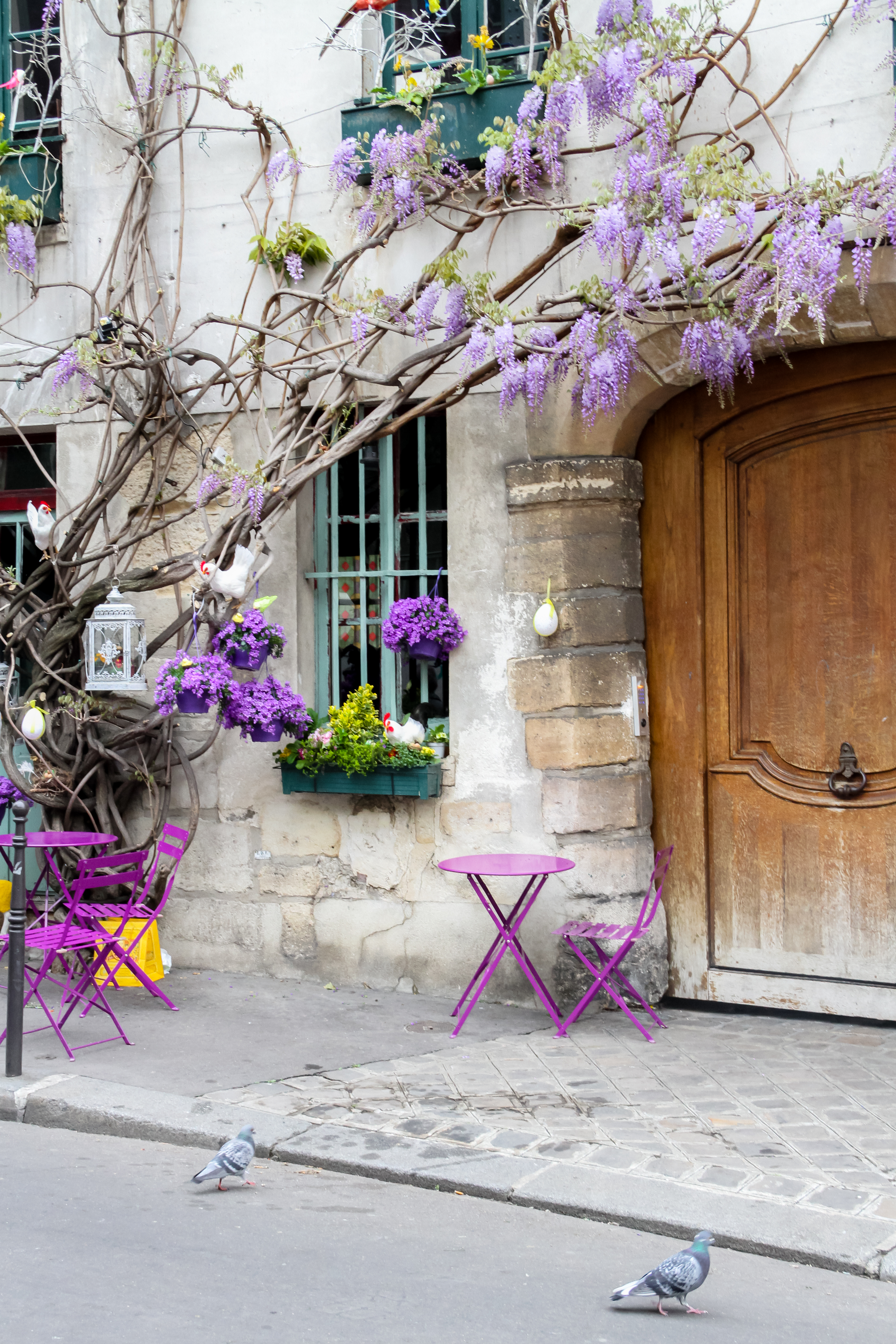 Rue Chanoinesse with wisteria in Paris, Julia Willard, Falling Off BIcycles